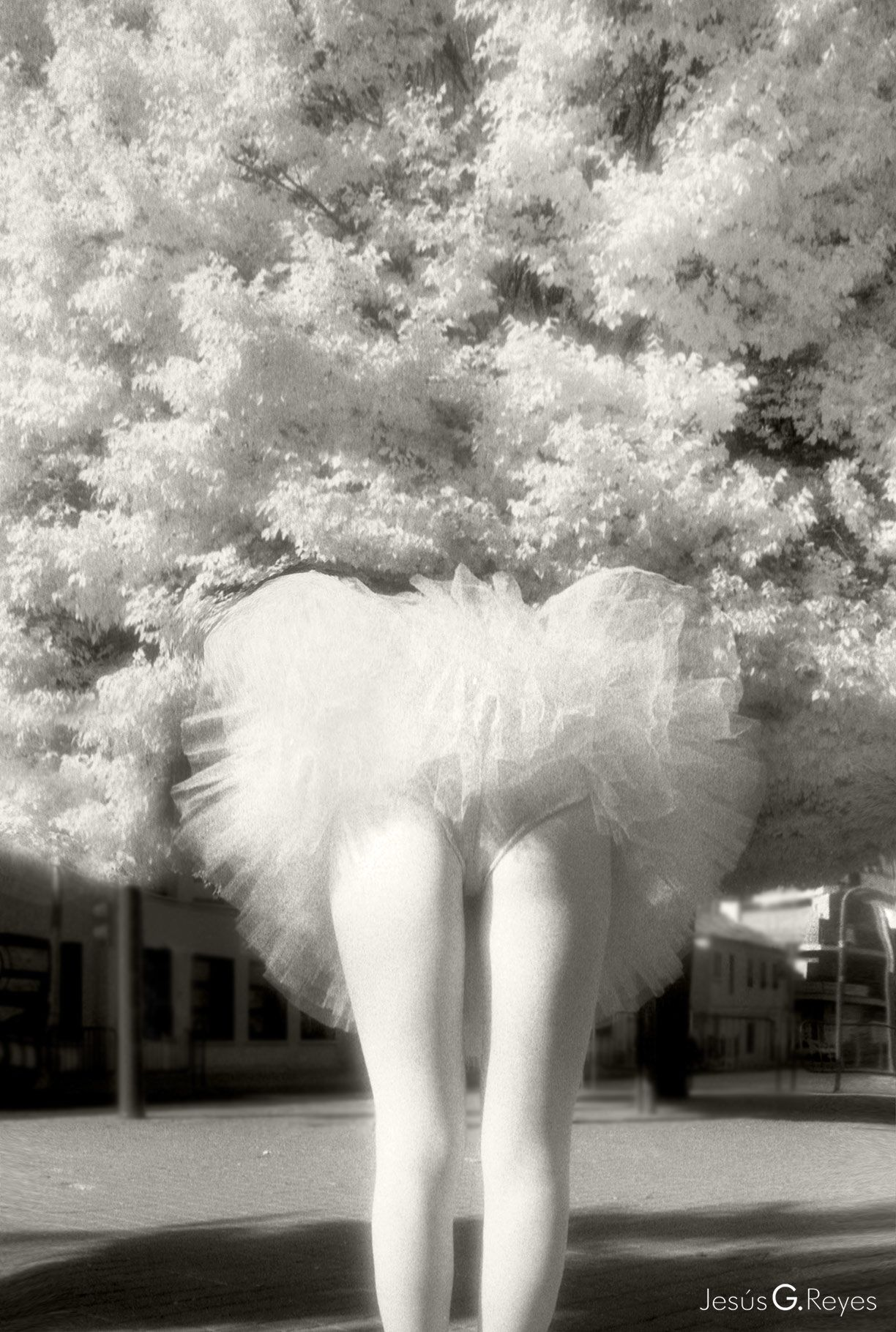 1st Prize. V Photo Contest PHOTO ZOOM. Alcala de Henares. Madrid.1