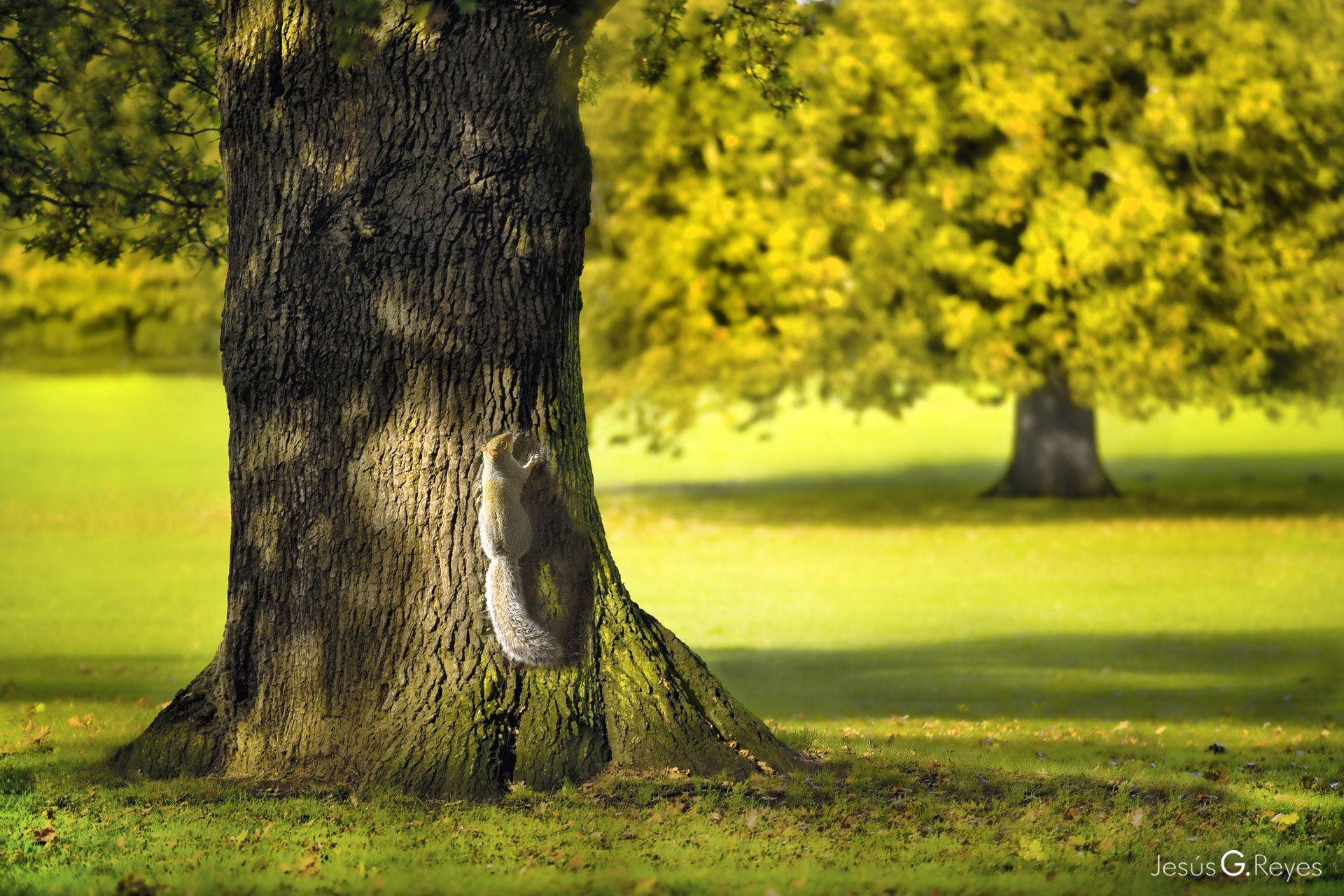 Squirrel in the oak. London