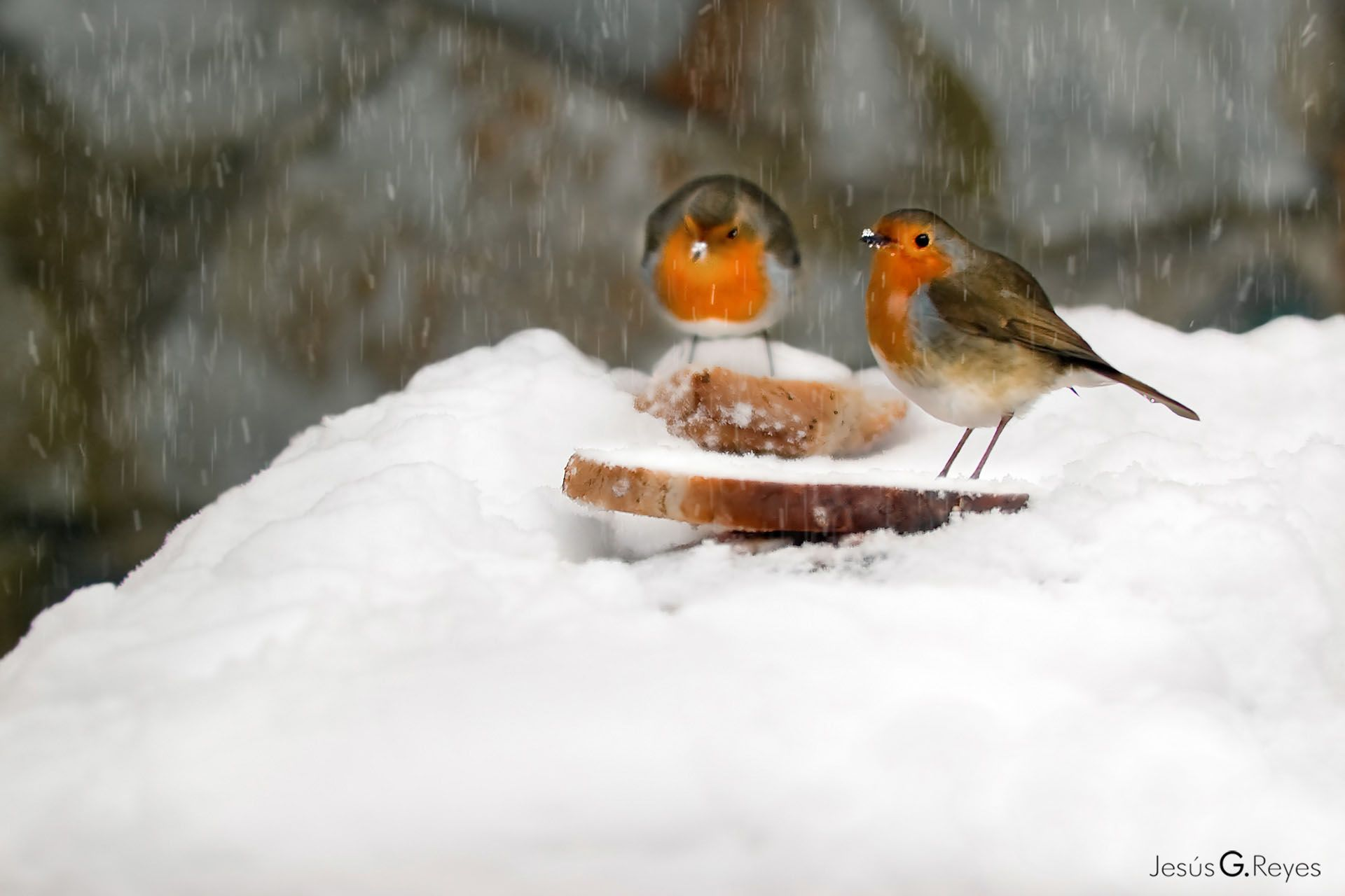 Birds in the snow. London