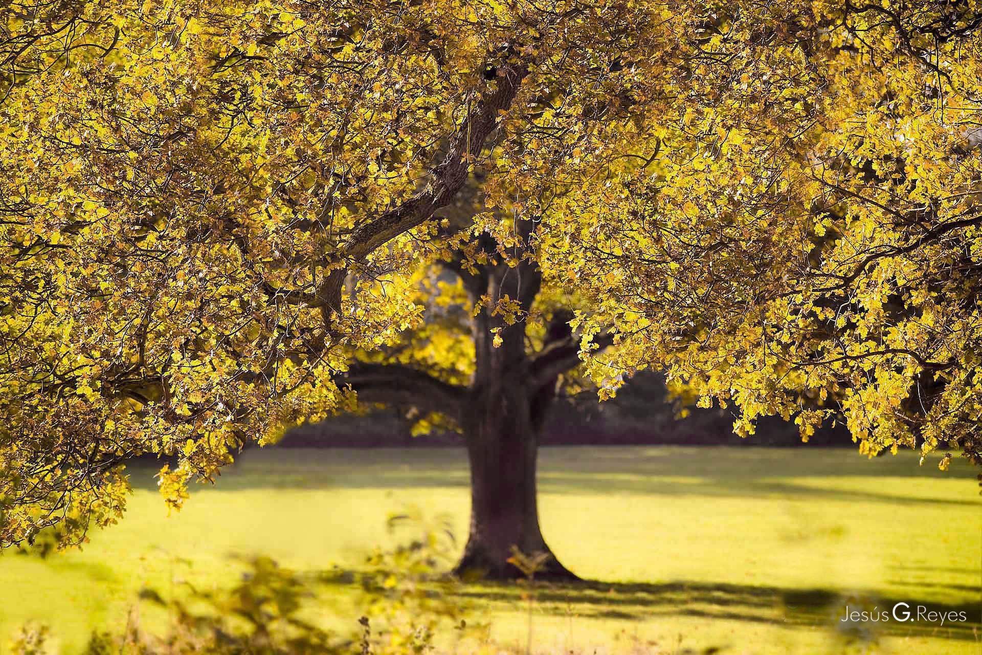 Autunm oak. London