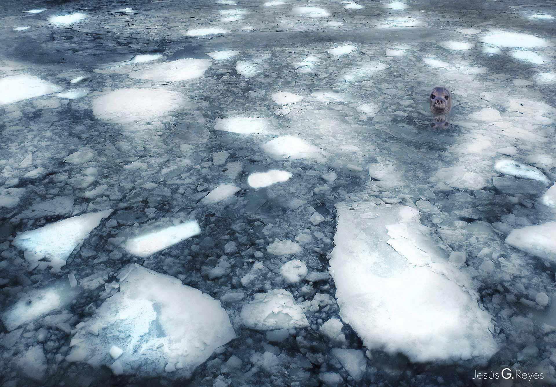 Foca en el mar Báltico