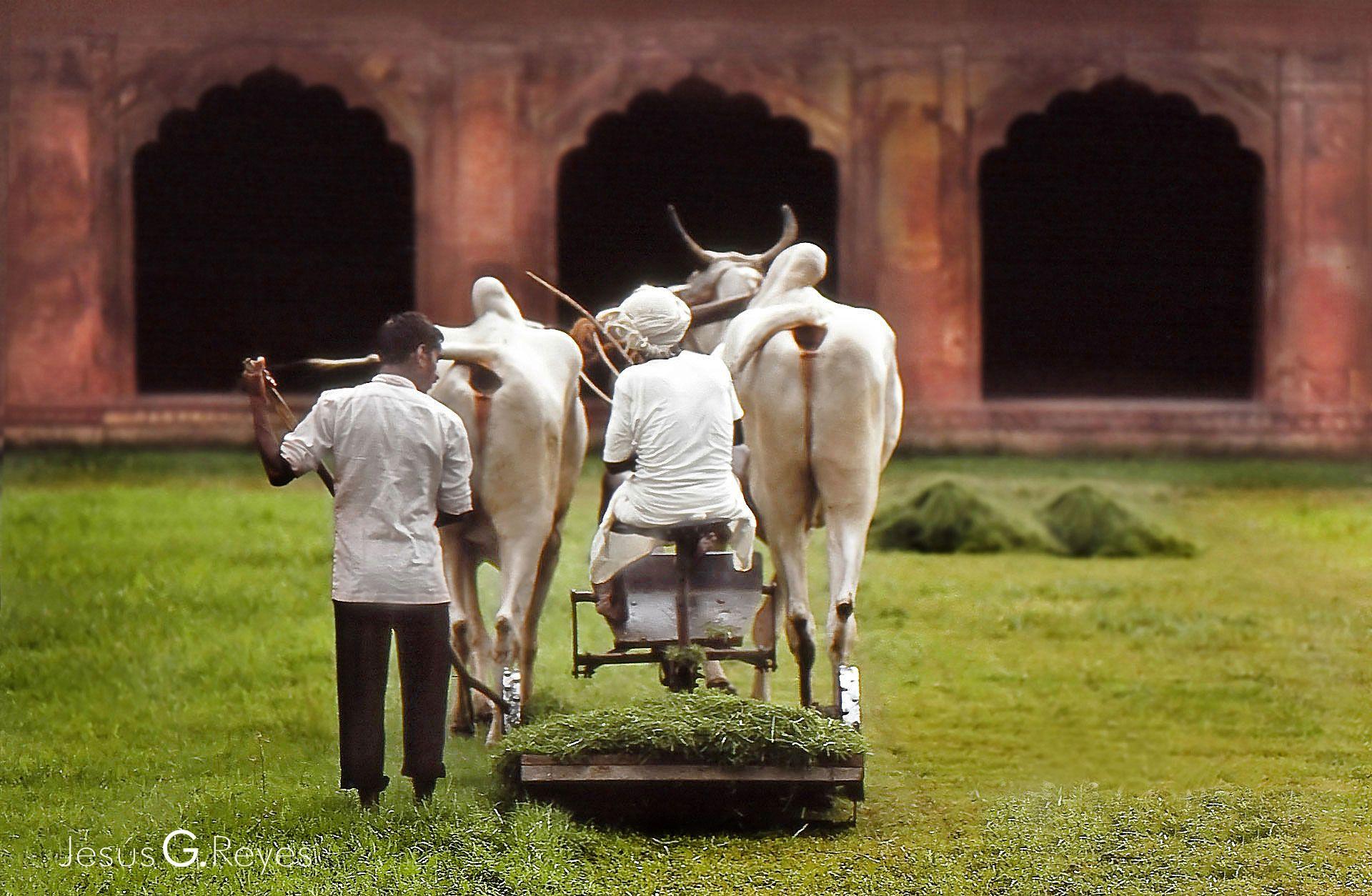 Agra. India